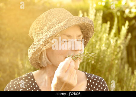 Elderly lady with straw hat in her garden enjoying the intense aroma of her homegrown rosemary in the golden light - Stock Image