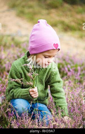 Girl picking heather - Stock Image