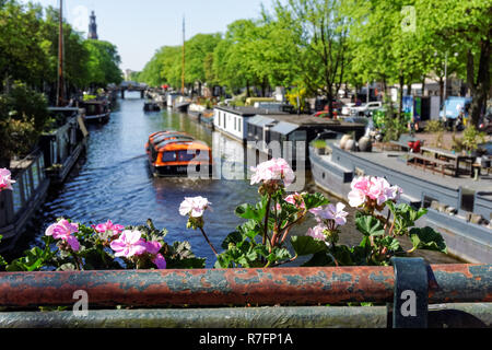 Houseboats on Prinsengracht canal in Amsterdam, Netherlands - Stock Image