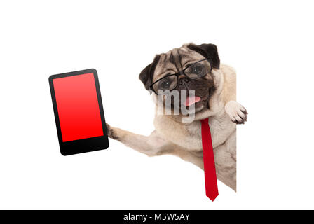 frolic business pug puppy dog with red tie and glasses, holding up tablet phone with blank red screen, hanging sideways - Stock Image