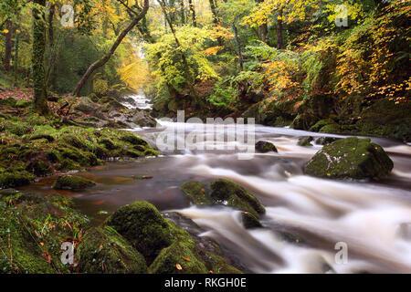 River Erme near Ivybridge in autumn Dartmoor national park Devon Uk - Stock Image