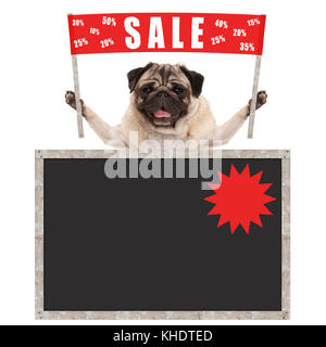 happy cute pug puppy dog holding up red banner sign with text sale % off, with blank blackboard, isolated on white - Stock Image