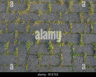 Grass and weeds growing through cracks in paved area. - Stock Image