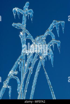 ICE ON GRASS - Stock Image
