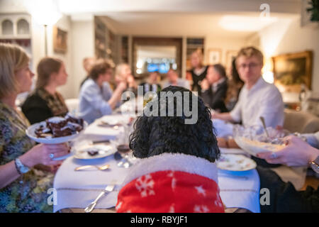 A small dog in a Christmas suit presides over Christmas lunch - Stock Image