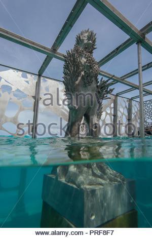 Statue of the Coralarium with coral in Maldives - Stock Image