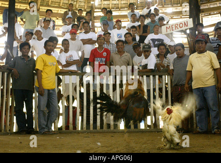 Filipinos watch a cockfighting match at a rural cockhouse in Oriental Mindoro, Philippines. - Stock Image