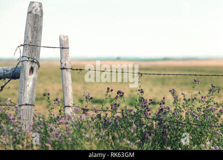 Open Range and Barb Wire Fence, MT, USA - Stock Image