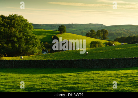 Late raking sunlight striking typically gently rolling hills dotted with sheep and trees in Cumbria. - Stock Image