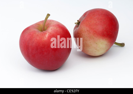 Domestic Apple (Malus domestica), variety: Peach Red Summer Apple. Two apples, studio picture against a white background. - Stock Image