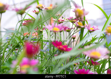 Grass and flowers on a sunny day - Stock Image