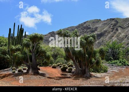 Koko Crater Botanic Garden - Oahu, Hawaii - Stock Image