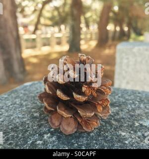 Single pine cone on granite slab, with muted color palette for a vintage feel. - Stock Image