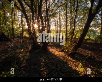 The afternoon sun shining through the trees in an English woodland in autumn - Stock Image