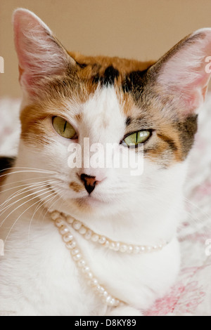 Calico cat laying relaxed on a quilt with pearls around her neck - Stock Image