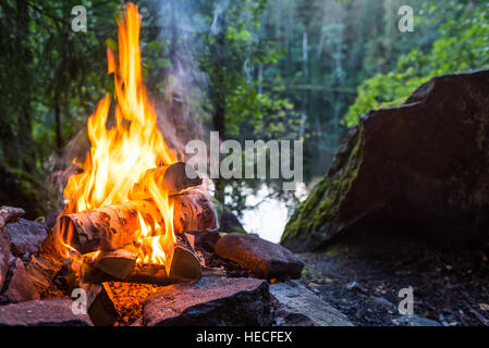 Burning campfire in forest - Stock Image