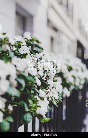 LONDON, UNITED KINGDOM - August 23rd, 2018: beautiful London fences with flowers and decor shot at shallow depth of field - Stock Image