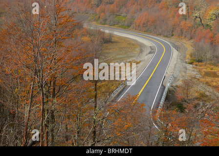 Autumn in National route 231, Paso Puyehue also known as Cardenal Samoré, between Argentina and Chile. - Stock Image