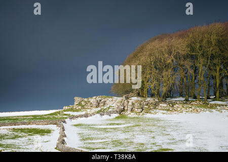 A small copse of trees in Derbyshire as a snow storm approaches. - Stock Image