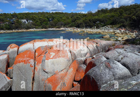 Seatons Cove, Bay of Fires Conservation Area, Tasmania, Australia. No PR - Stock Image