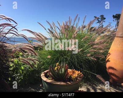 Beach view garden - Stock Image