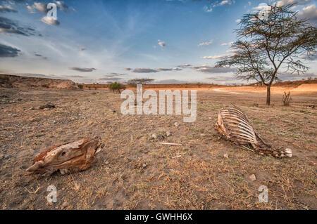 Landscape of Magadi Kenya with animal skull and skeleton. - Stock Image
