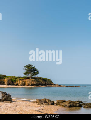 tree standing on the atlantic coast on a sunny day with no clouds in the sky - Stock Image