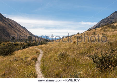 Walking track in rural New Zealand - Stock Image
