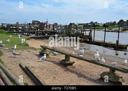 Seagulls waiting for the fishermen to come into to the estuary at Southwold Seaside Resort in Suffolk, UK - Stock Image