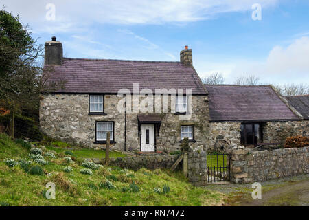 A renovated traditional Welsh stone farm cottage on Llyn Peninsular with Snowdrops growing outside. Trefor, Gwynedd, Wales, UK, Britain - Stock Image