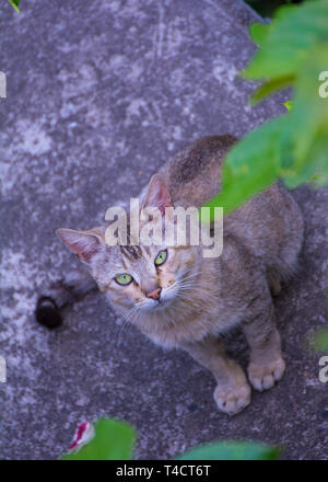 Cat Looking Above - Stock Image