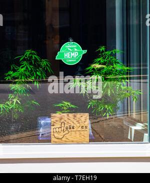 JOHNSON CITY, TN, USA-4/27/19: A sign and two marijuana plants in window of the East Tennessee Hemp Company. - Stock Image