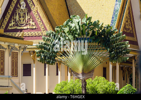 Travelers Palm tree (Ravenala madagascariensis) and building in gardens in the Royal Palace complex. Phnom Penh, Cambodia, southeast Asia - Stock Image