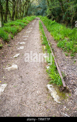 Path through the Luxulyan Valley in Cornwall, England, UK, which includes the remains of a 19th century industrial tramway - Stock Image