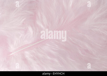 Light pink feather background close up full frame. - Stock Image