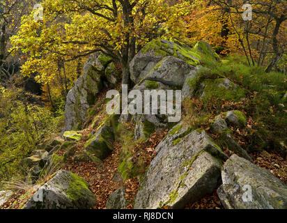 Deutschland, Hessen, Naturpark Hessische Rhön, UNESCO-Biosphärenreservat, die Steinwand bei Poppenhausen, Herbst - Stock Image