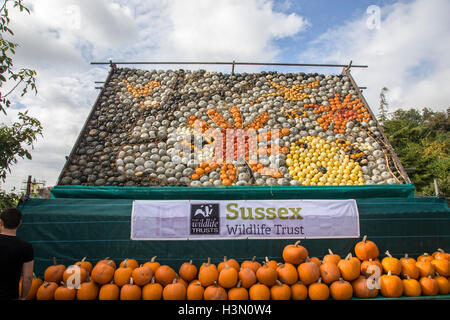 The 2016 display of pumpkins done by Slindon Pumpkins supporting Sussex Wildlife Trust. - Stock Image