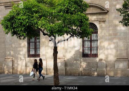 Two women passing an orange tree in Seville - Stock Image