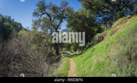 Canyon trail through green wooded wilderness in southern California. - Stock Image