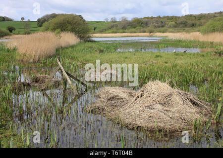 Wetland Habitat in RSPB Leighton Moss Nature Reserve, Silverdale, Lancashire, UK - Stock Image