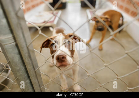 Dog shelter is an animal shelter with a sad cute dog looking up wanting someone to take him home today. - Stock Image