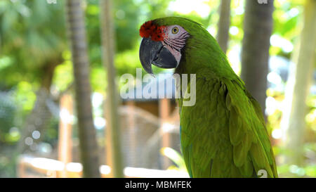 A green parrot on a branch - Stock Image
