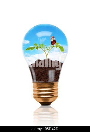 Young seedling growing out of soil with butterfly inside light bulb. Concept of new life or beginning; environmental conservation or green movement. I - Stock Image