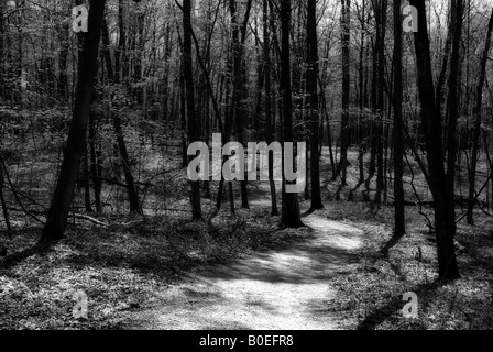 Trail in woods shot in black and white - Stock Image