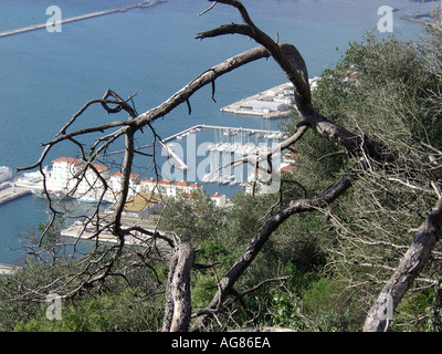 Gibraltar Marina and Harbour Viewed from Upper Rock Nature Reserve  Marina harbour boats ships shipping tankers looking down - Stock Image