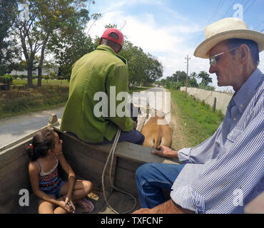 Tobacco farmer and grandchild take a ride in an ox cart with farm worker to tour his tobacco plantation Pinar Del Rio Province, Cuba, Caribbean - Stock Image