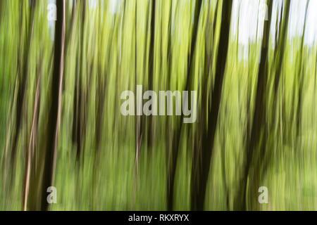 Wood blurred at the Plöner See or Lake Plön, Plön, schleswig-holsteinische Schweiz, Schleswig-Holstein, Germany, Europe - Stock Image