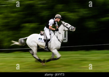 Angus Smales on his white horse A Bit Much gallops along a straight section in front of a woodland on a sunny day - Stock Image