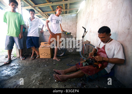A chicken doctor stitches the wounds on a fighting cock outside a cockhouse near Mansalay Oriental Mindoro, Philippines. - Stock Image