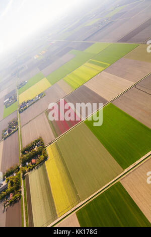 Aerial view of the tulip fields in North Holland , The Netherlands - Stock Image